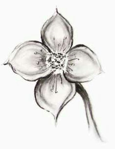 dogwood flower pencil drawings for beginners beginner sketches simple pencil drawings art drawings