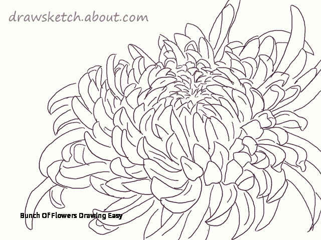 bunch of flowers drawing easy learn how to draw an ogiku chrysanthemum bloom of bunch of