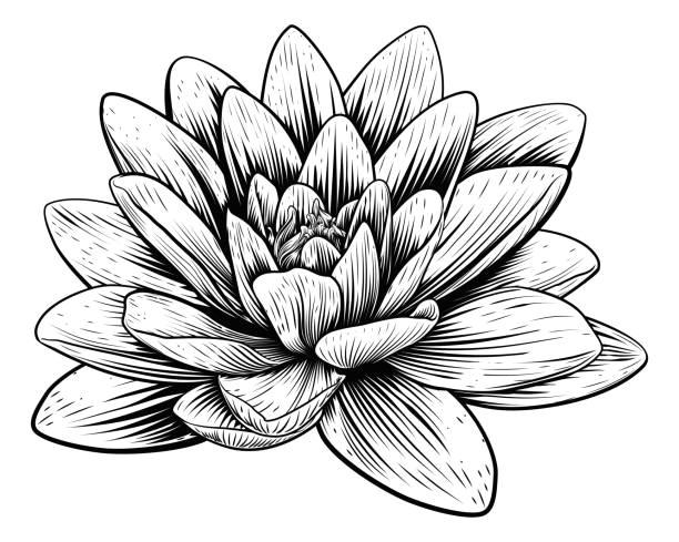 lotus flower water lily vintage woodcut etching vector art illustration