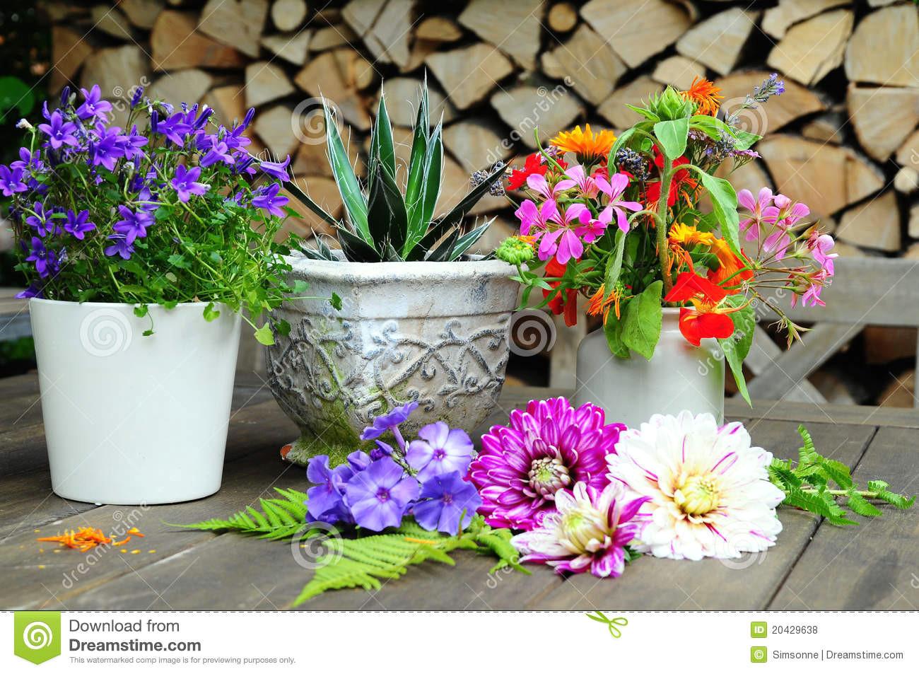 garden dahlia flower pot