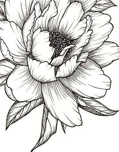 peony flower art print of pen illustration flower drawing