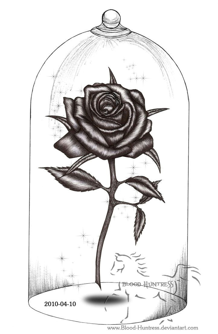 rose drawings rose pen drawing with glass by blood huntress on deviantart