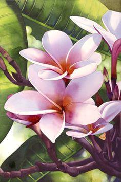 lawai plumeria iii watercolor by kathleen alexander flores plumeria silk painting painting