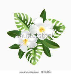 plumeria hawaiian plants monstera banana leaves summer holidays wedding or arrangement design elements vector floral illustrations