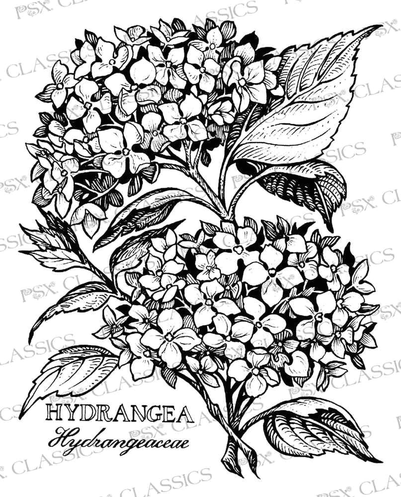 hydrangea botanical psx design classics on www addictedtorubberstamps com