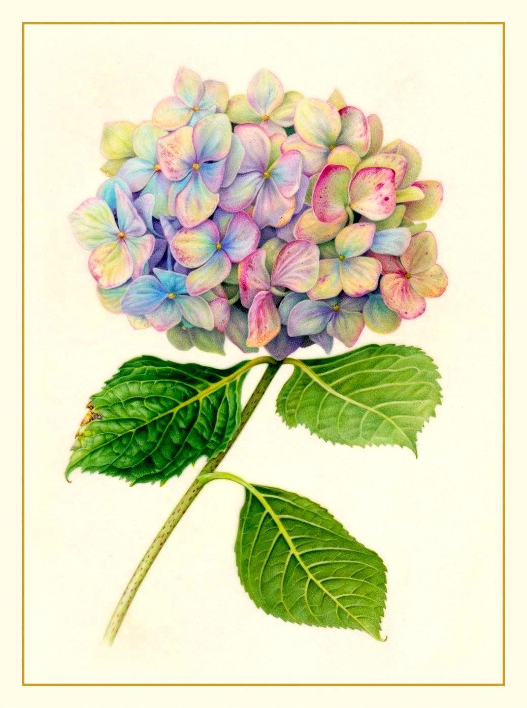 hydra hydrangea tattoo hydrangea flower flower water color painting flower watercolor hydrangea