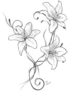 lilies drawing lilly flower drawing