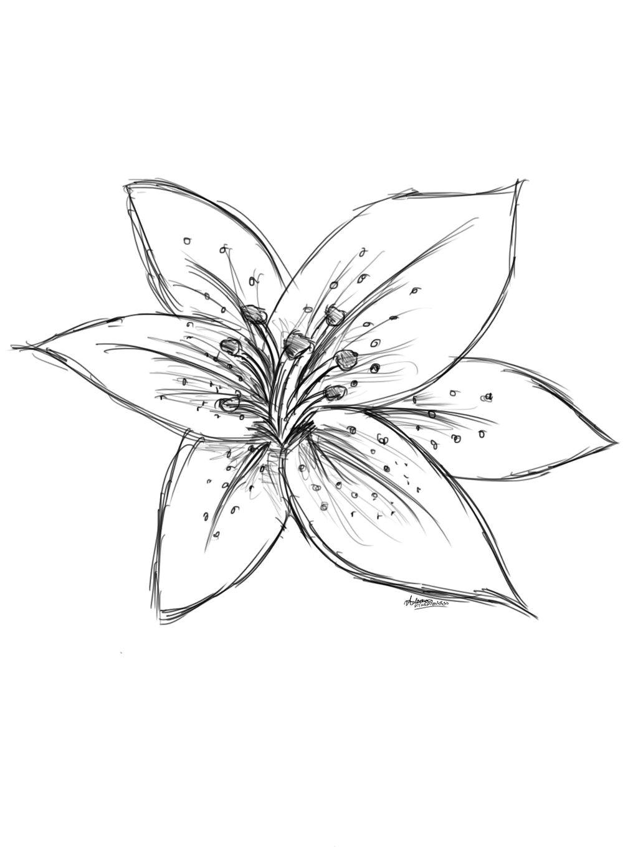 image result for sketch lily flower