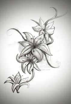 tiger lilly tattoo lilly flower tattoo lilly tattoo design lilly flower drawing