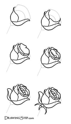 learn how to draw roses by following this great step by step how to draw flowers diythought