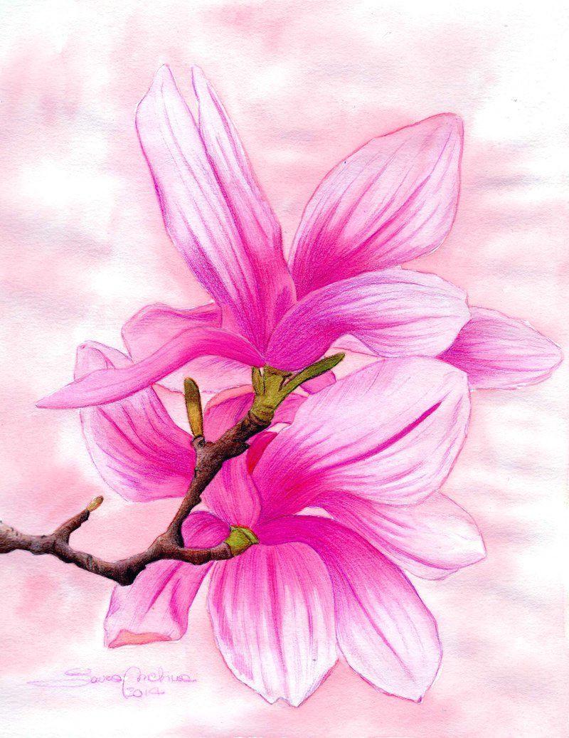 magnolia by lauramel deviantart com on deviantart