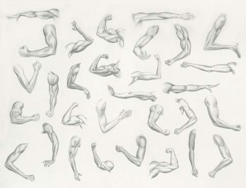drawing of female arms google search