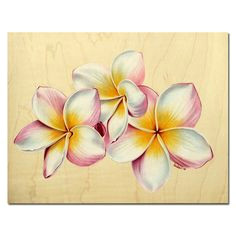 plumeria 21 rainbow yellow pink frangipani tropical hawaii flower colored pencils painting sandrine curtiss originalart 8 5