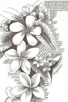 plumeria more hawaiian flower drawing