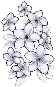 plumeria flower drawing google search hawaiian flowers flower tattoos tatting body art