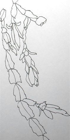 contour christmas cactus