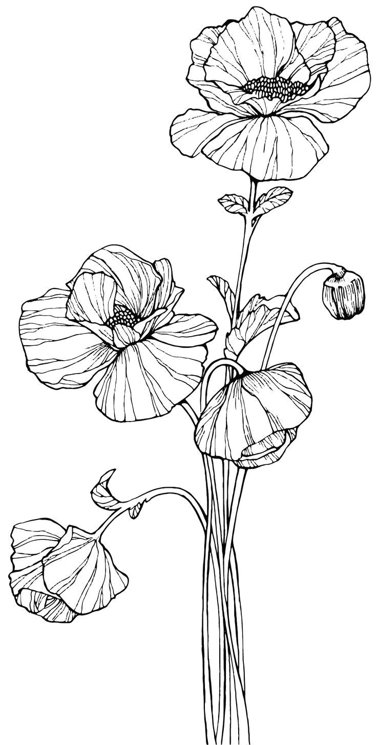 image result for how to draw line art poppies