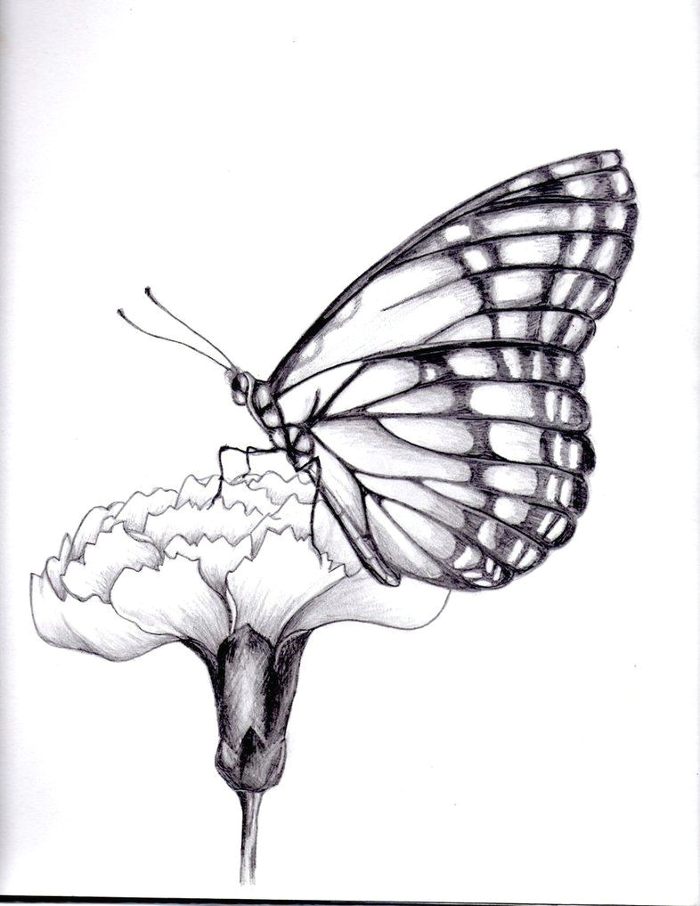 drawings of flowers and butterflies my drawing of a butterfly by kittycat727 on deviantart
