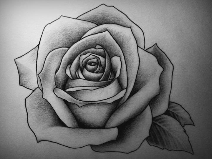rose by detailedexpressions deviantart com on deviantart