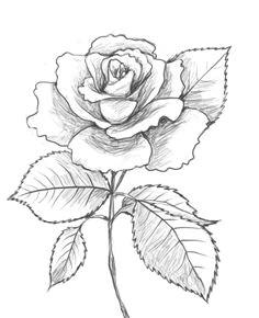 la conception de raaves rose drawingsdrawing