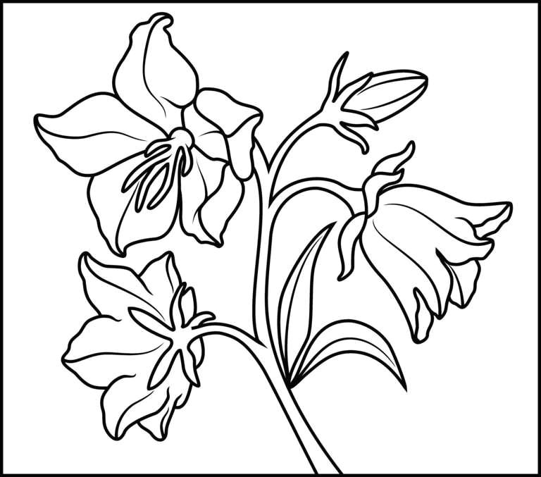 hawaiian flower coloring page fresh new flower clipart outline colour in pages best coloring page 0d drawing