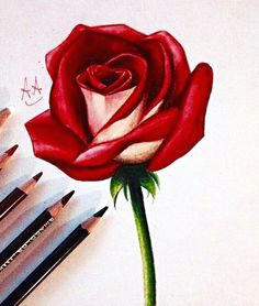 how to draw a rose more rose drawing