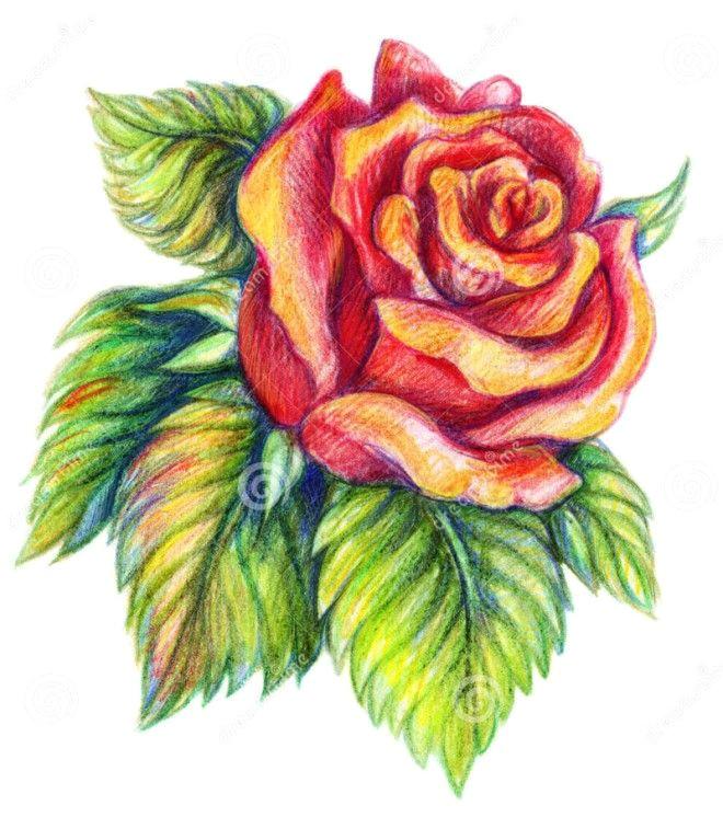step in pencil flower drawings rose more