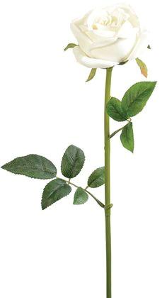 rose stem 23 white