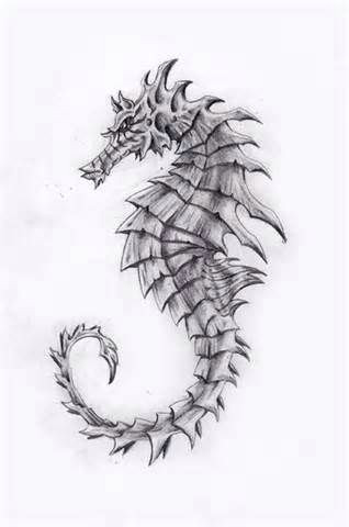 seahorse drawing seahorse tattoo seahorse art ocean art seahorses animal drawings