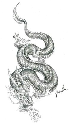 dragon tatoo dragon tattoo colour dragon tattoo sketch small dragon tattoos dragon