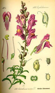 floral drawing plant drawing botanical prints botanical flowers botanical drawings botanical