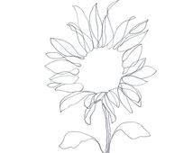minimalist abstract botanical pencil drawing archival art print graphite sunflower