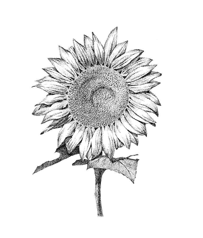 sun flower by jee sun kim