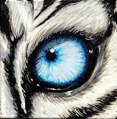 drawings of tigers eyes