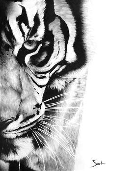 tiger art print bengal tiger oil painting tiger by signedsweet tiger drawing tiger sketch