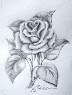 pencil drawing the rose rose sketch rose drawing pencil flower pencil drawings