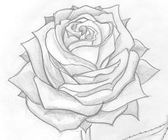 rose drawings in pencil maybe a tattoo idea rose drawings pencil drawings