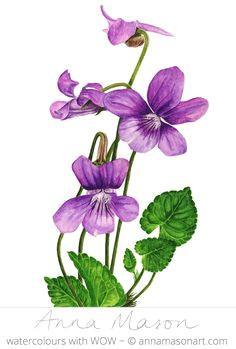 violet a c 2007 annamasonart com 23 x 31 cm 9 x