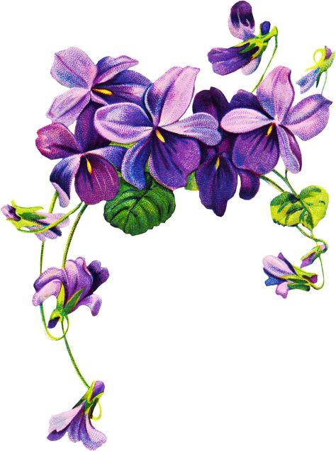16 best violet flower tattoos images violet flower tattoos violet tattoo ink