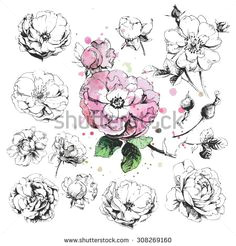 flower set highly detailed hand drawn roses