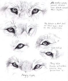 wolf eyes wolf eye drawing wolf eyes animal drawings drawings of wolves