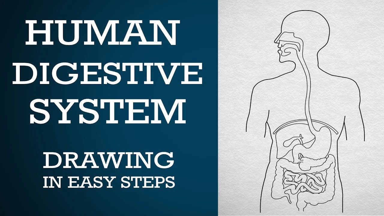 easy way to draw human digestive system life processes ncert class 10 science cbse biology