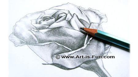 rose drawing lessons