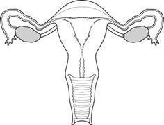 the art of resistance the exquisite uterus