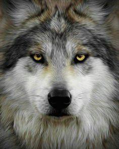 magnificent wolf canis lupus wolf spirit spirit animal gray wolf wolf eye