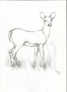 pencil easy animal sketch drawing koi fish drawing tiger drawing fish