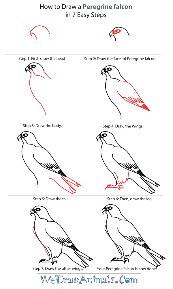 how to draw falcon google search