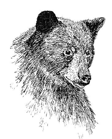 animals drawn in pen