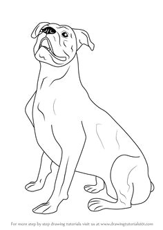 learn how to draw a boxer dog farm animals step by step drawing tutorials