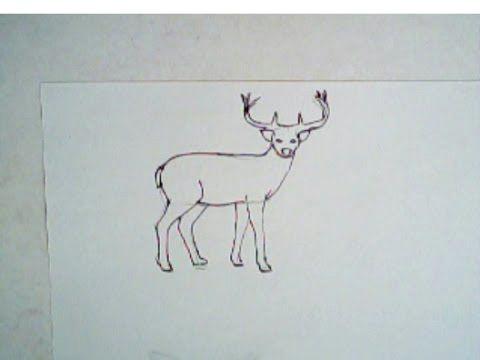 how to draw a buck deer simple drawing lesson deer drawing buck deer